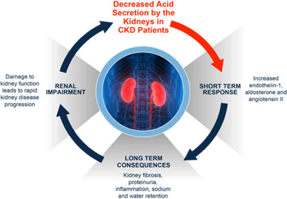 Image depicting certain effects of decreased acid secretion by the kidneys in CKD patients