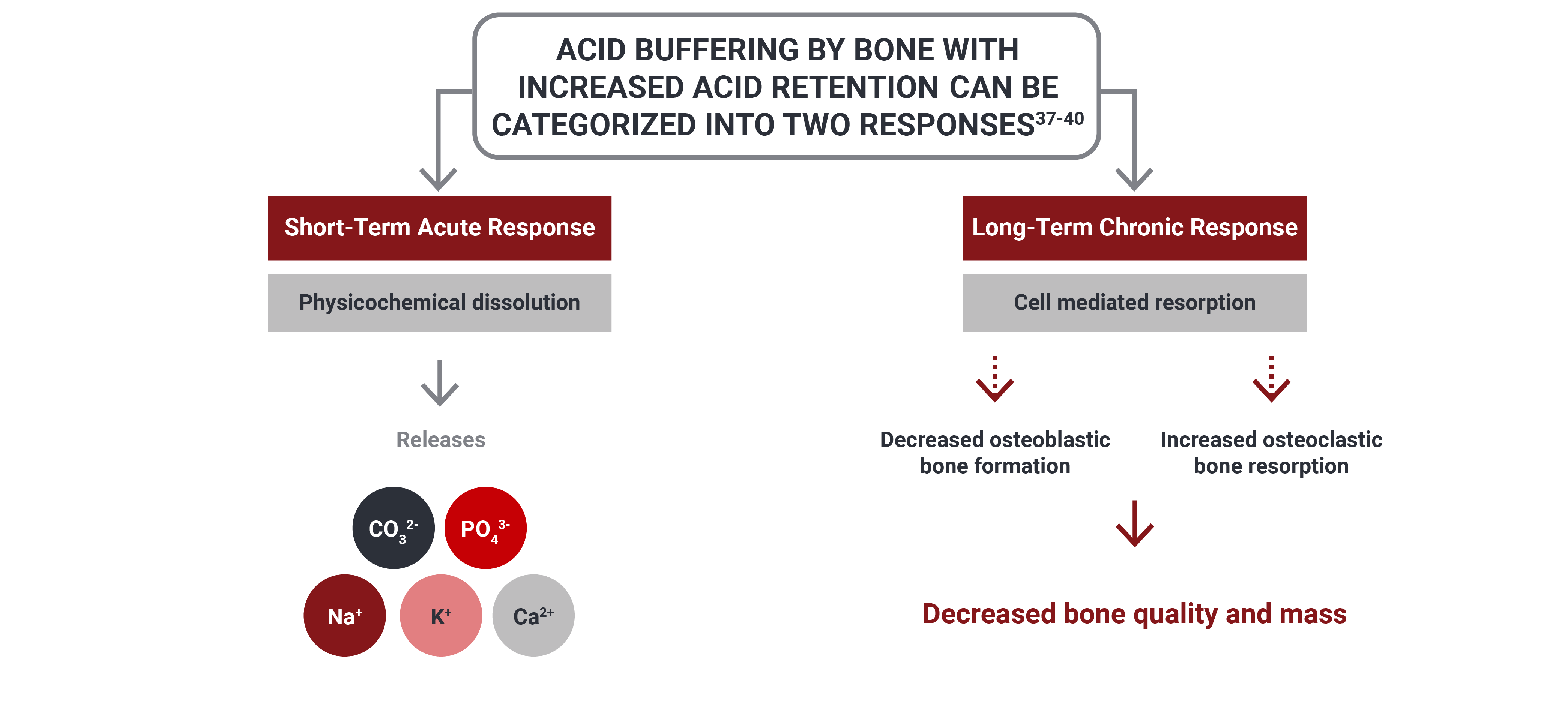Acid buffering by bone with increased acid retention.
